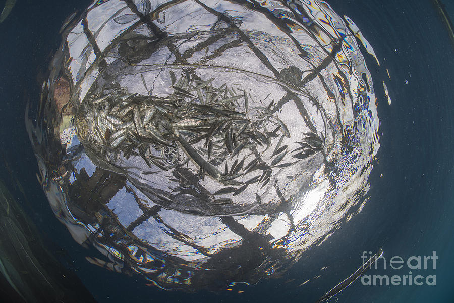 Fish Caught In A Fishing Net Photograph