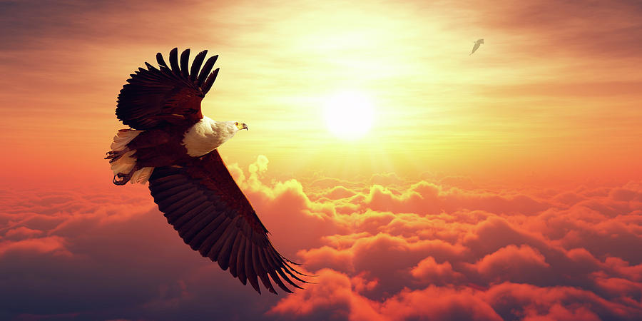 Fish Eagle Flying Above Clouds Photograph