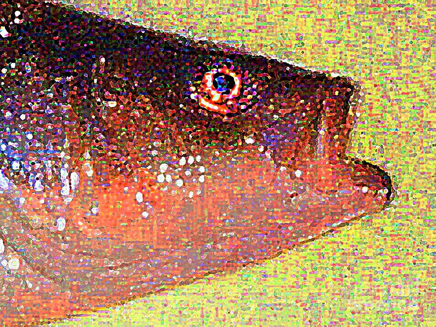 Fish Digital Art - Fish Head by Wingsdomain Art and Photography