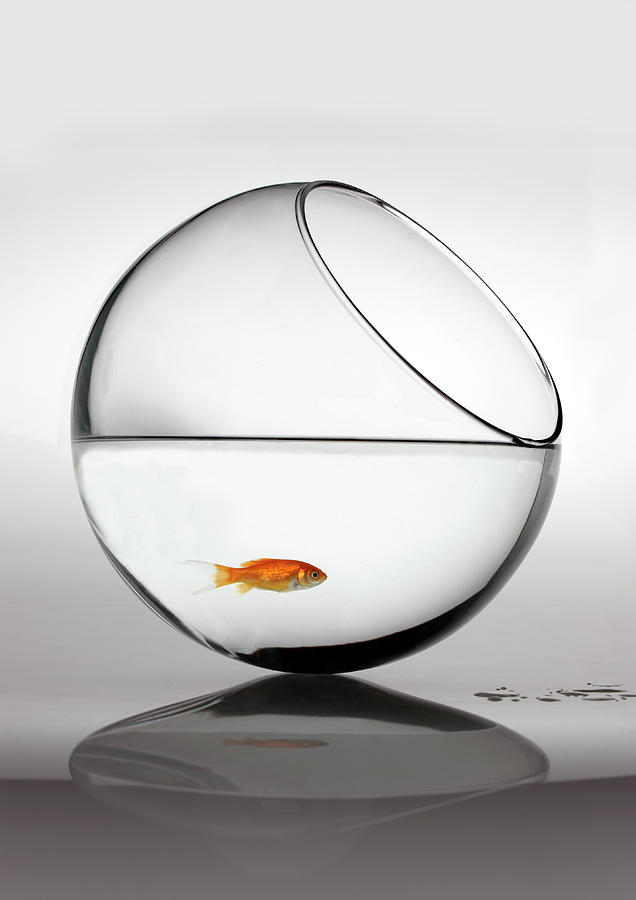 Vertical Photograph - Fish In Fish Bowl Stressed In Danger by Paul Strowger