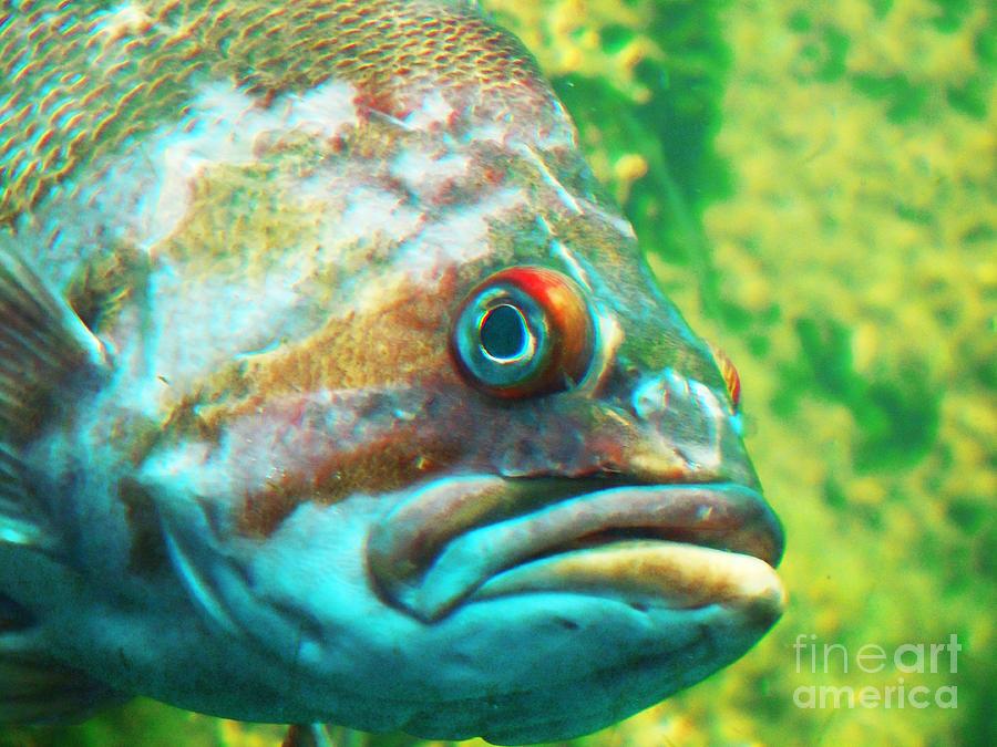 Fish Looking At You Photograph by David Frederick