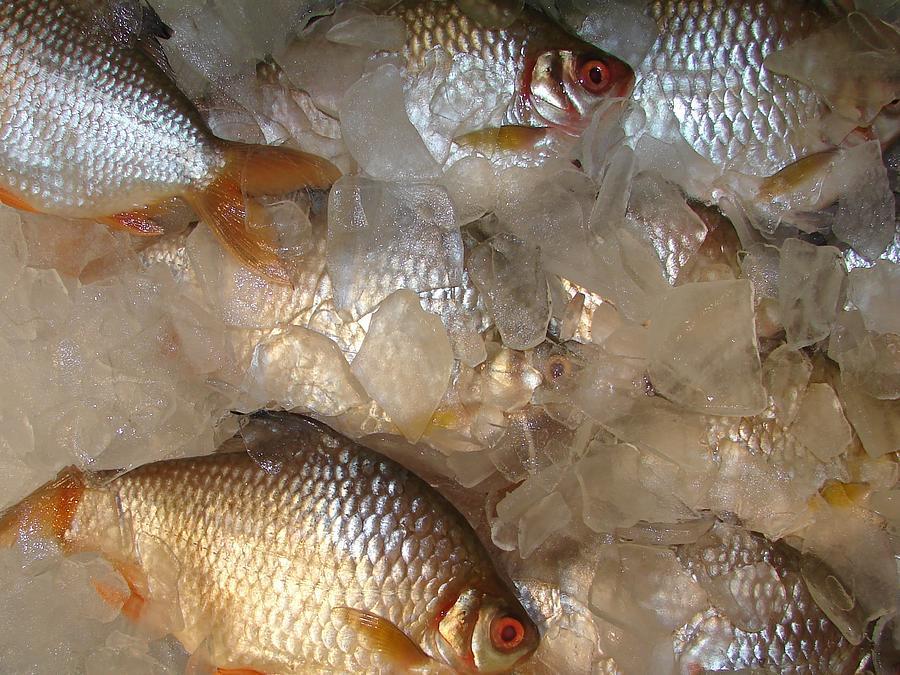 Fish Market #1 Photograph