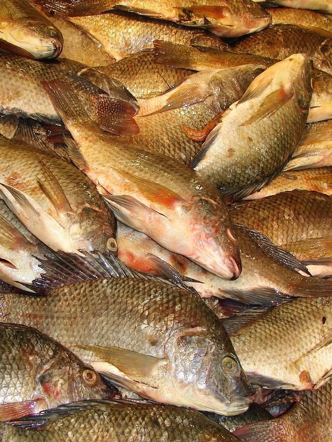 Fish Market#2 Photograph