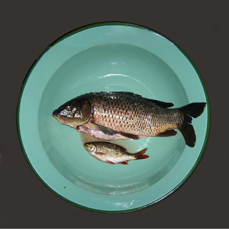 Fish on plate by Lenka Rottova