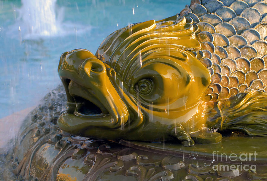 Fish Photograph - Fish Out Of Water by David Lee Thompson