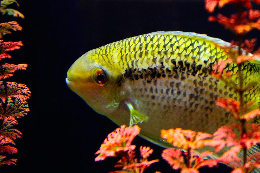 Fish Photograph - Fish by Rick  Monyahan