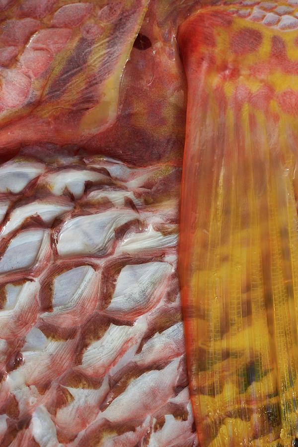 Fish Skin Photograph - Fish Skin by Steven Stregevsky