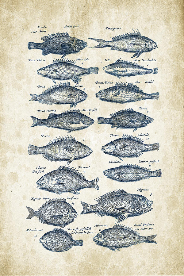 Fish Digital Art - Fish Species Historiae Naturalis 08 - 1657 - 14 by Aged Pixel