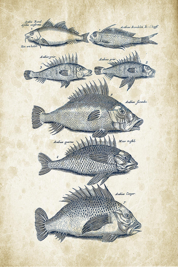 Fish Digital Art - Fish Species Historiae Naturalis 08 - 1657 - 16 by Aged Pixel