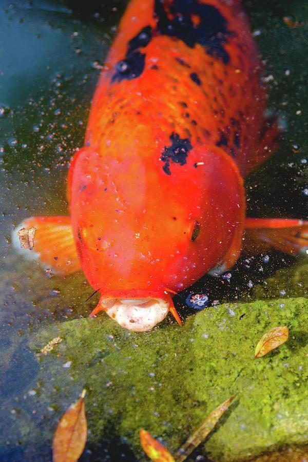 Fish Photograph - Fish Surprise by Raphael Lopez