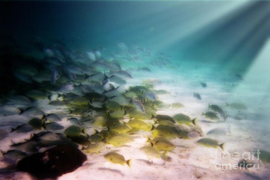 Underwater Digital Art - Fish Swim In The Light by Sven Brogren