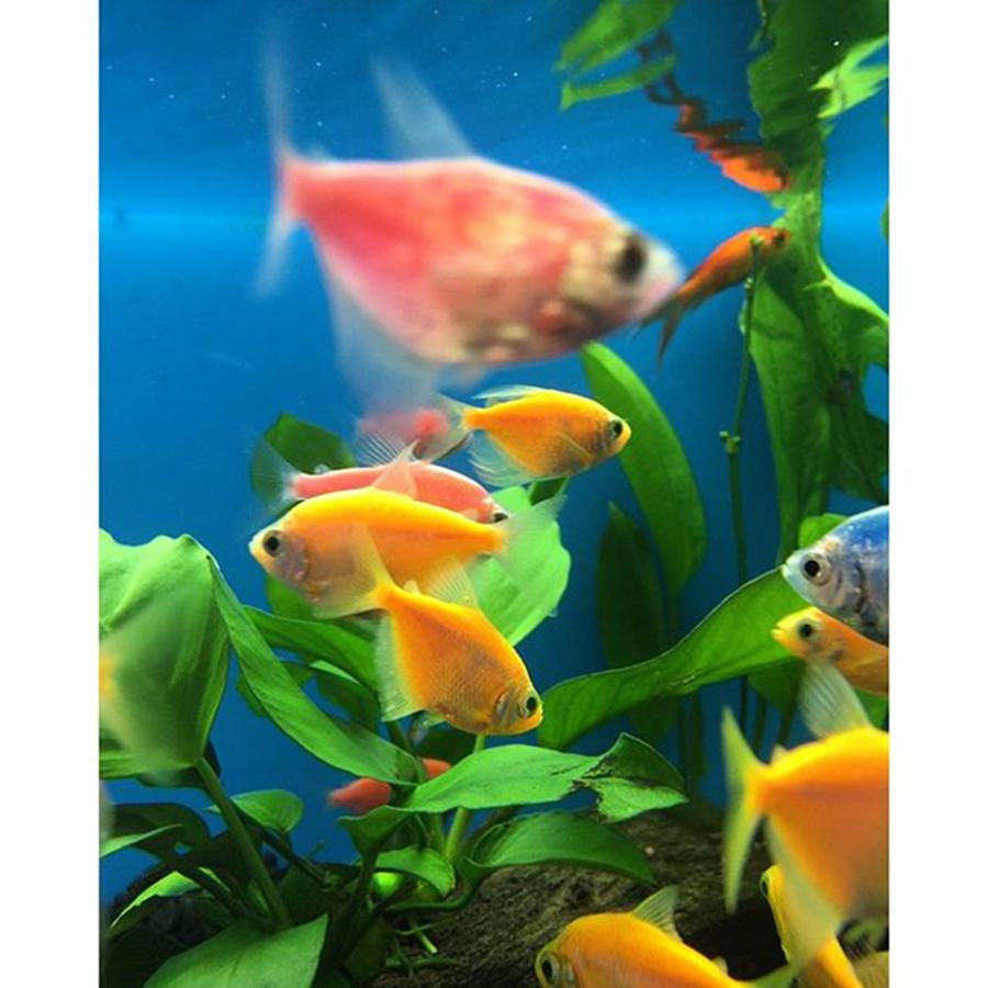 Colorful Photograph - Fish Tank With Colorful Fish by Juan Silva