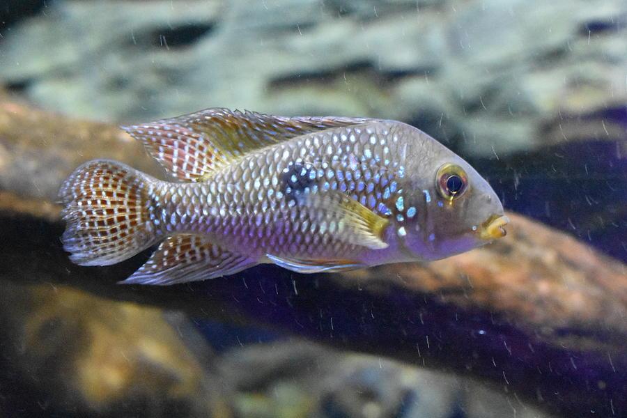 Underwater Photograph - Fish by Utpal Datta