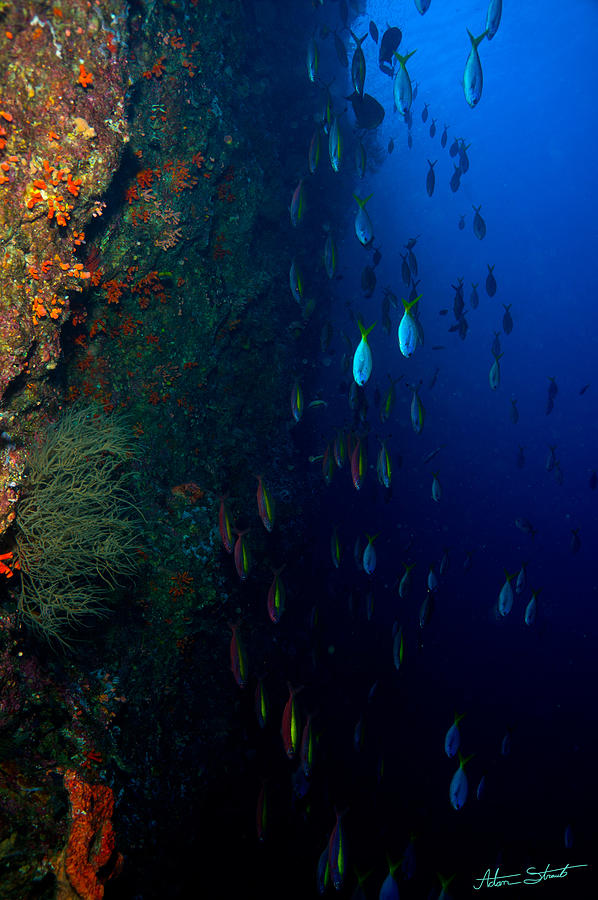 Diving Photograph - Fish Waterfall by Mumbles and Grumbles