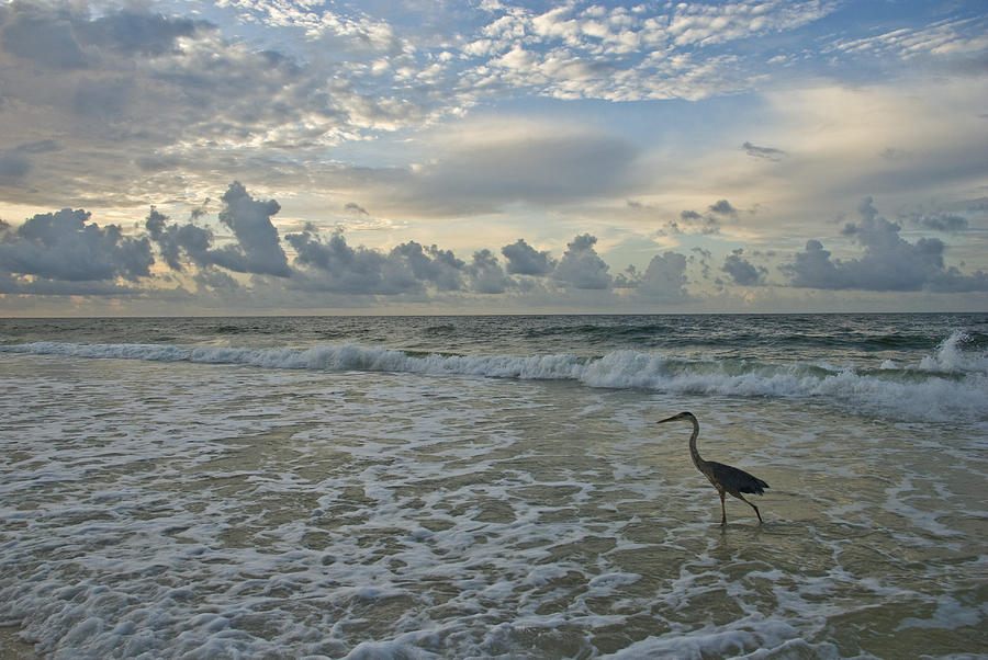 Blue Heron Photograph - Fishing In The Morning by Jennifer Kelly