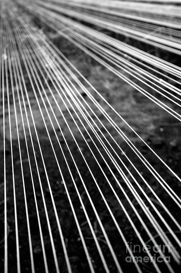 Abstract Photograph - Fishing Lines by Gaspar Avila