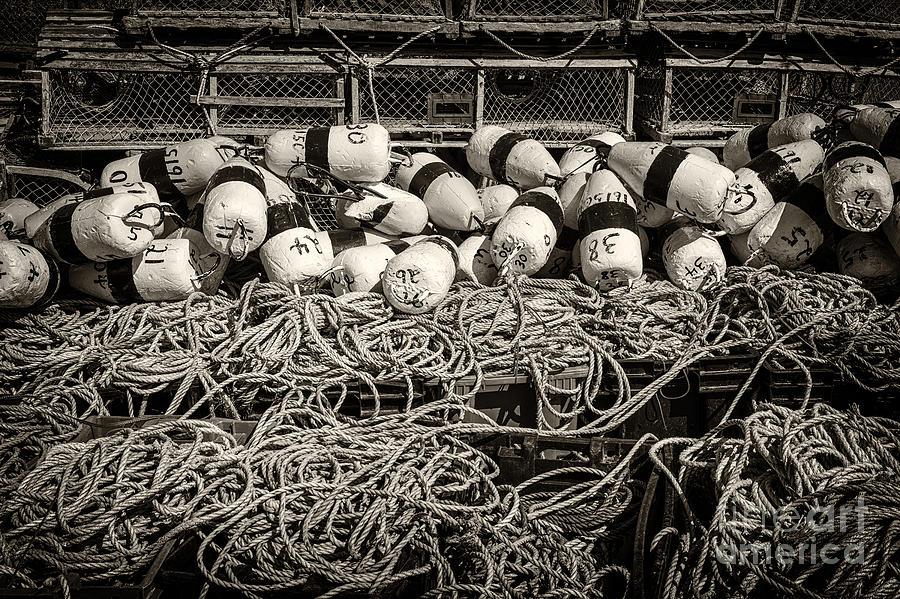 Floats Photograph - Fishing Lobster by Elena Elisseeva