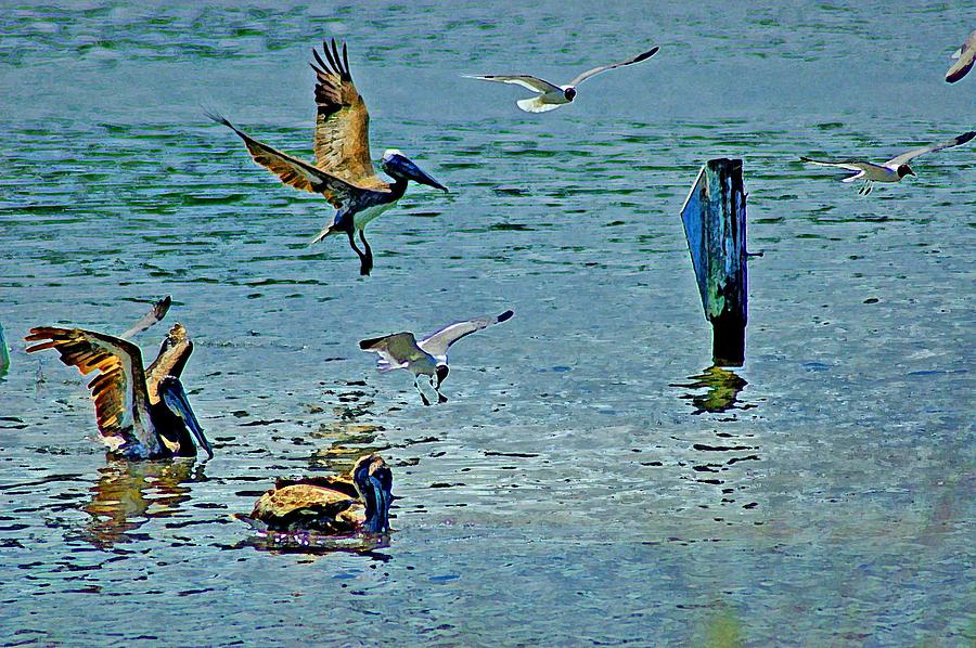 Birds Painting - Fishing Pelican And Seagulls by Michael Thomas