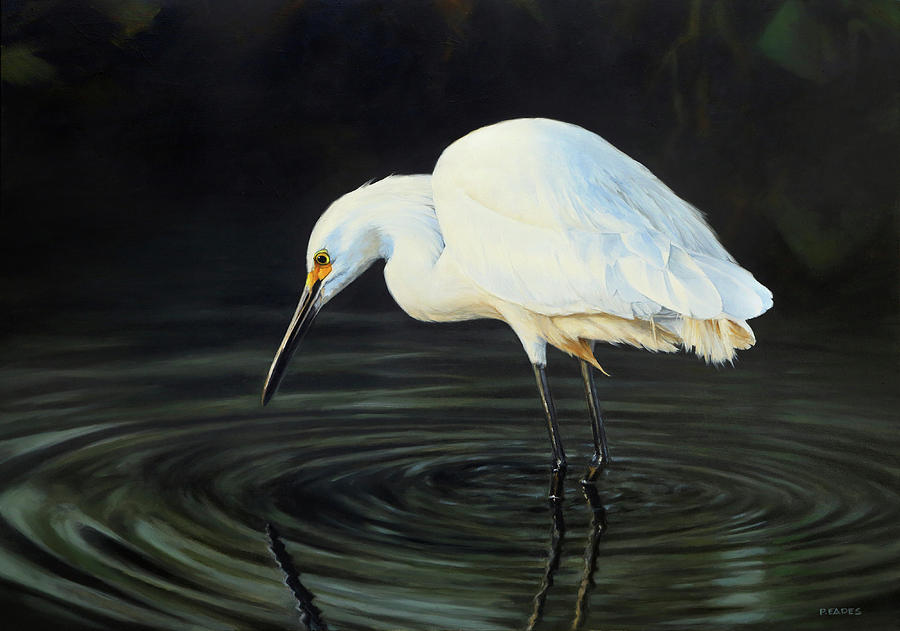 Fishing the Shadows by Peter Eades