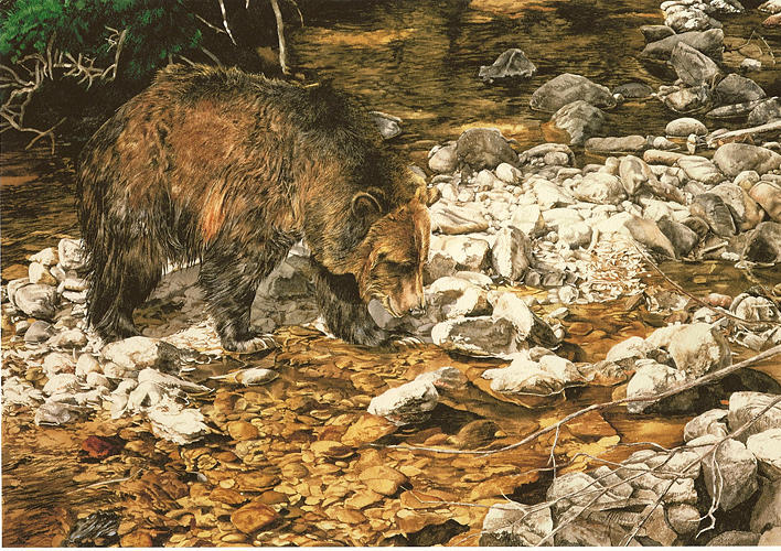 Bear Painting - Fishn The Shallows by Judith Angell Meyer