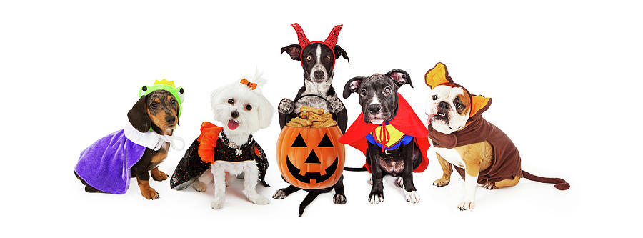 Animal Photograph - Five Dogs Wearing Halloween Costumes Banner by Susan Schmitz