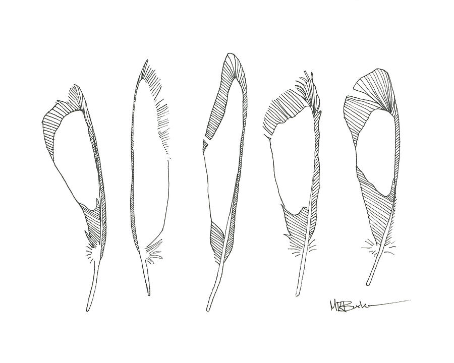 Five Feathers Drawing by Melissa Burke