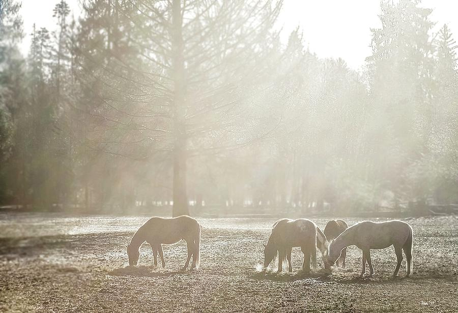 Horses Photograph - Five Horses In The Mist by Bill Linn
