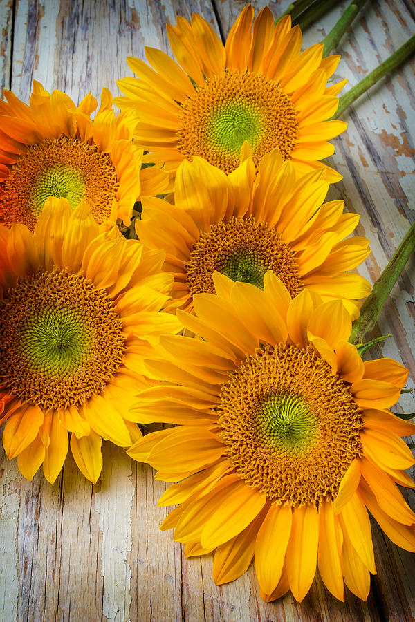 Single Photograph - Five Moody Sunflowers by Garry Gay
