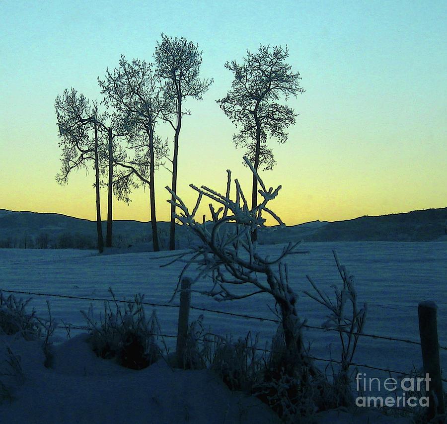 Five Poplars, frozen by Anne Havard