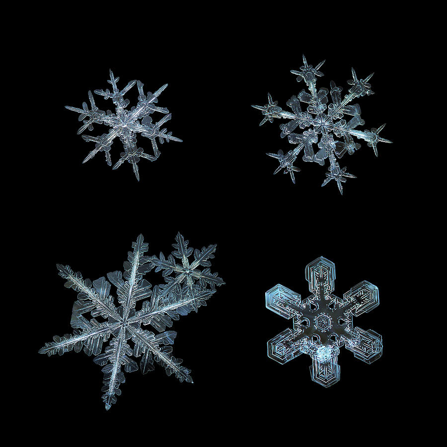 Five snowflakes on black 3 by Alexey Kljatov