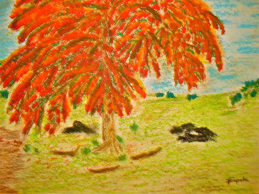 Tropical Tree Drawing - Flamboyan-tropical Splendor by Felix Zapata