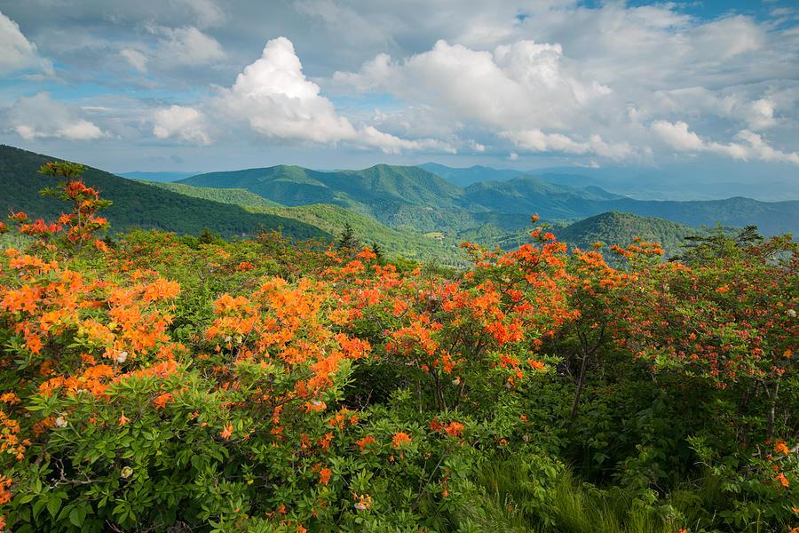 Flame Azaleas Roan Highlands Appalachian Trail by Rick Dunnuck