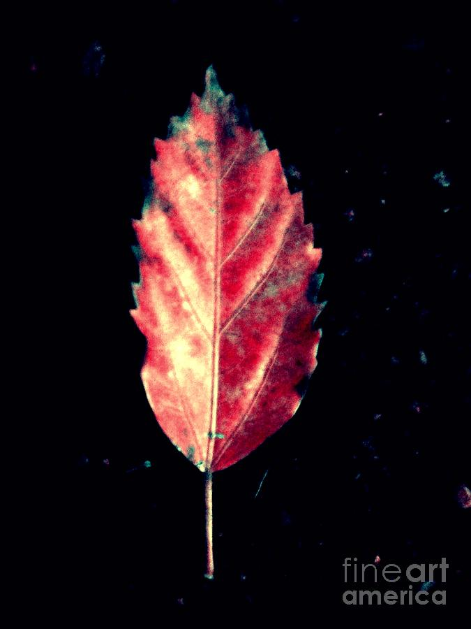 Leaf Photograph - Flame by Overall Bugzy