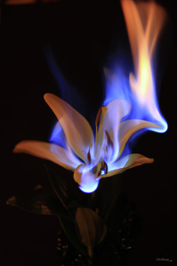 Flaming Flower 2 by Andrea Lawrence