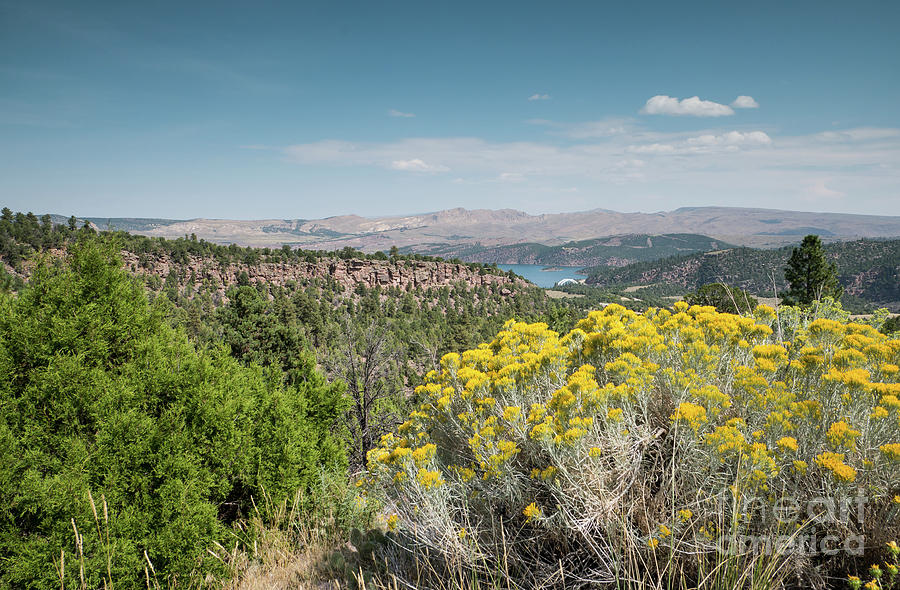 Flaming Gorge Chamisa by Patricia Gould