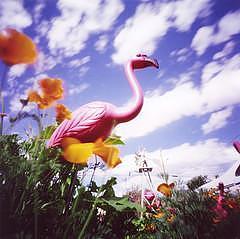 Garden Photograph - Flamingo    Gracies Garden by Sheila Bocchine