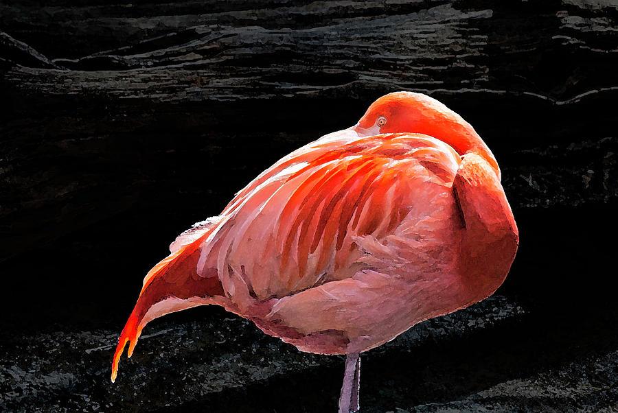 Flamingo - 8331 by G L Sarti