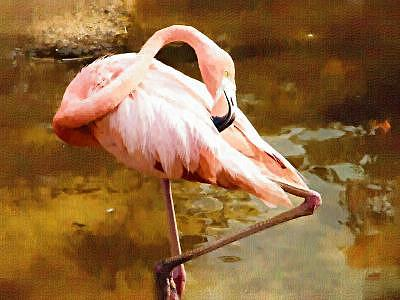 Flamingo Painting by Billy Shaw
