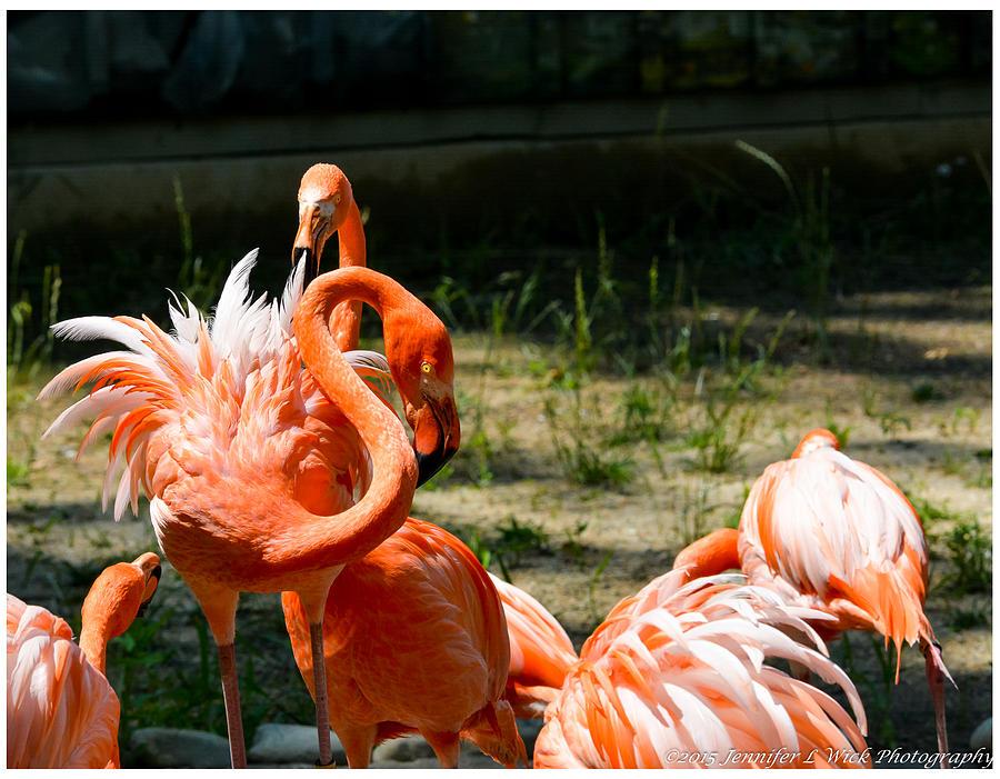Bird Photograph - Flamingo Colony by Jennifer Wick