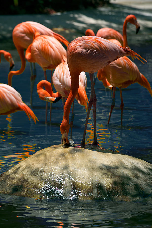 Flamingo Fountain by Lawrence Boothby