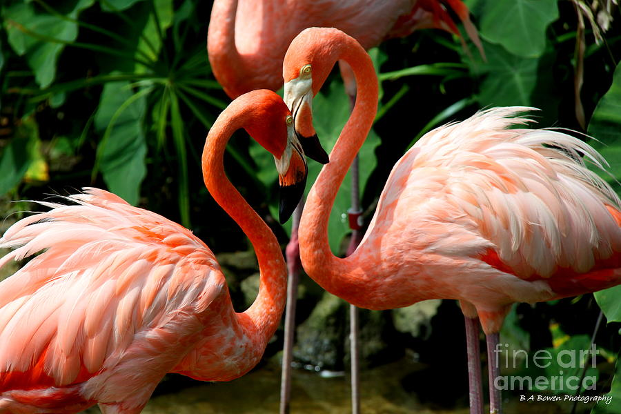 Pink Flamingo Photograph - Flamingo Heart by Barbara Bowen