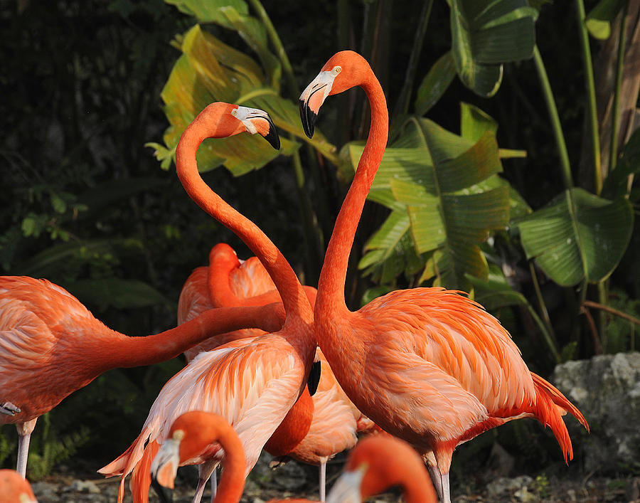Flamingo Photograph - Flamingo Heart by Keith Lovejoy