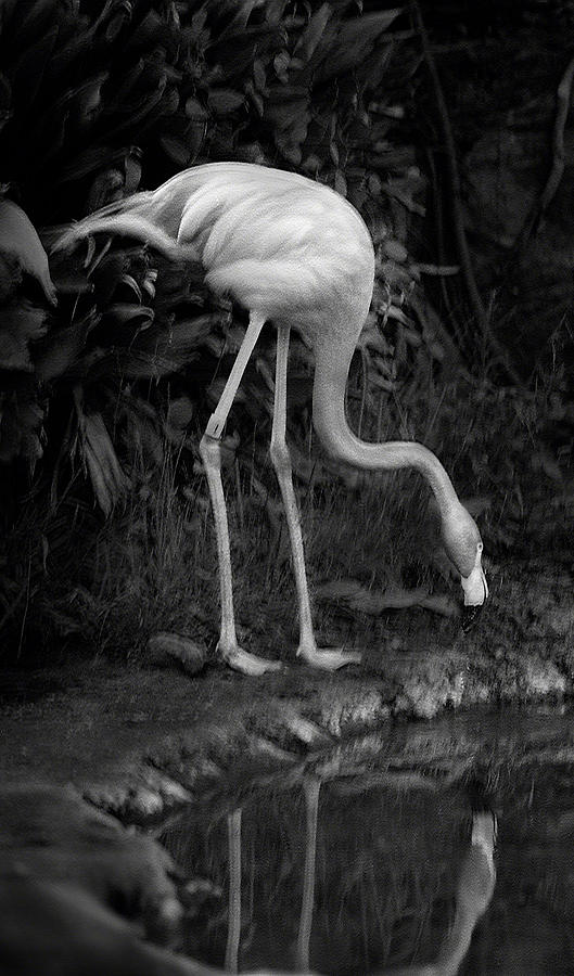 Flamingo Lake, film finish by Maria Reverberi