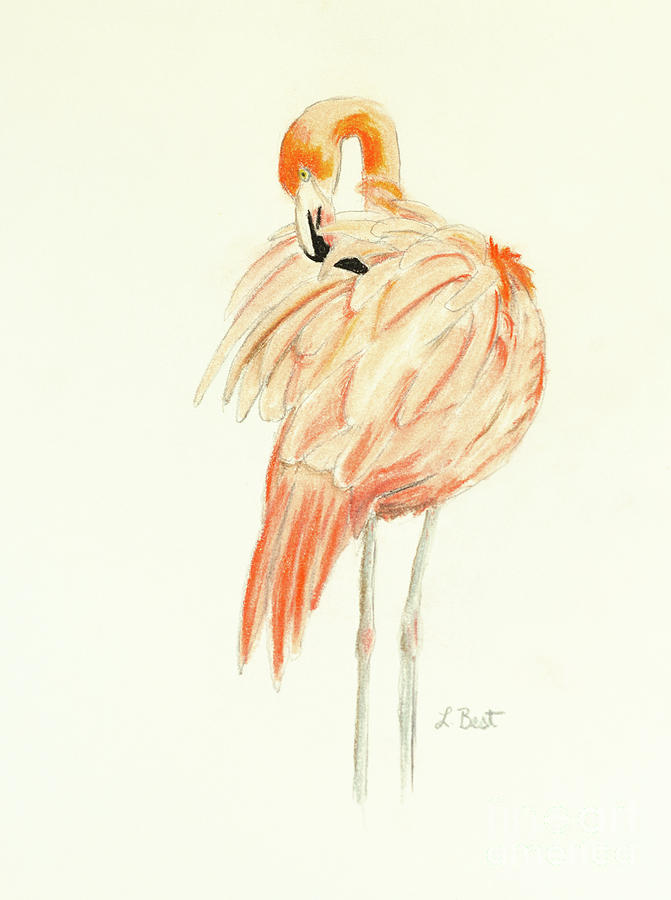 Flamingo Painting - Flamingo by Laurel Best