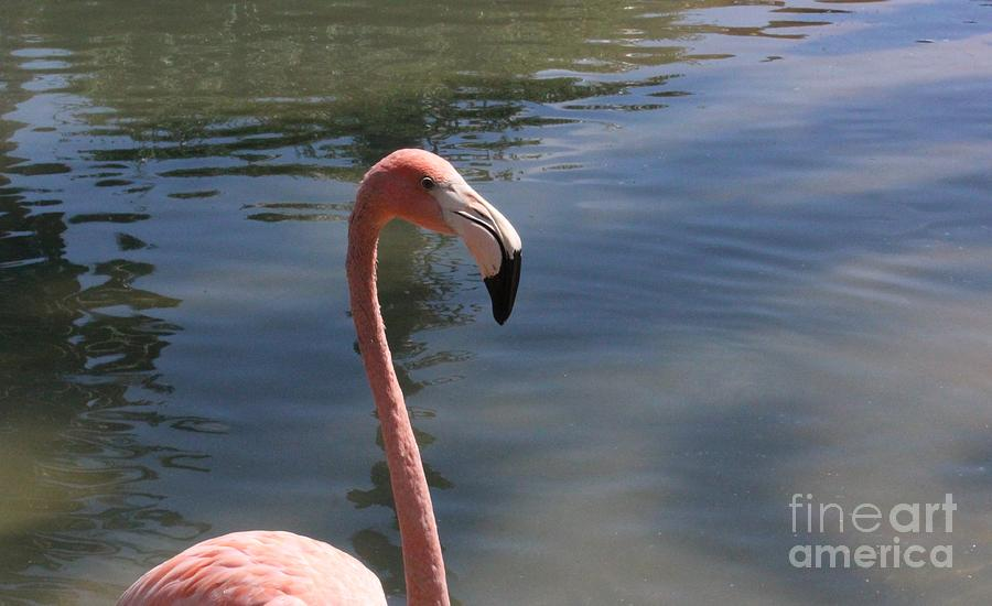 Flamingo Photograph - Flamingo by LKB Art and Photography