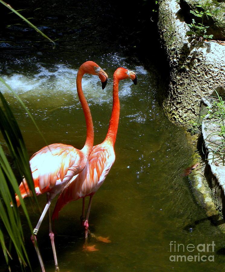 Flamingo Photograph - Flamingo Pair by Terri Mills