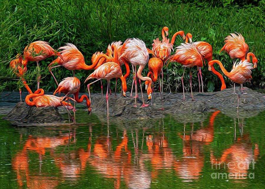 Flamingo Reflection Photograph