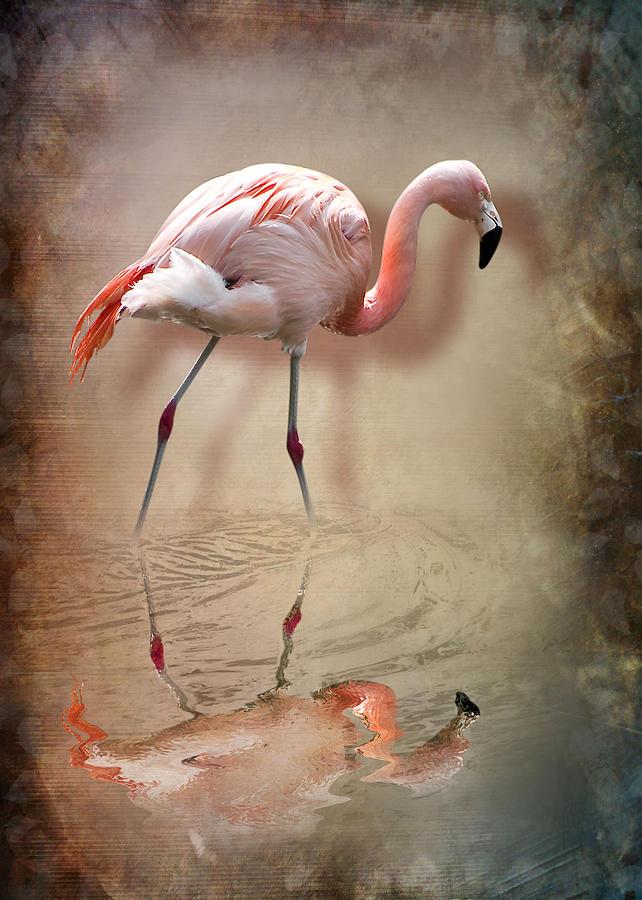 3d Photograph - Flamingo by Svetlana Sewell