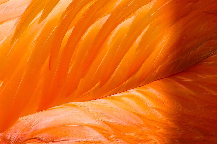 Flamingo Wing by Jon Reddin