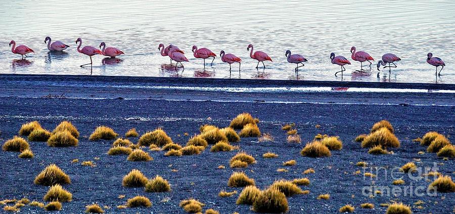 Flamingos Photograph - Flamingos At Torres Del Paine by Bernardo Galmarini